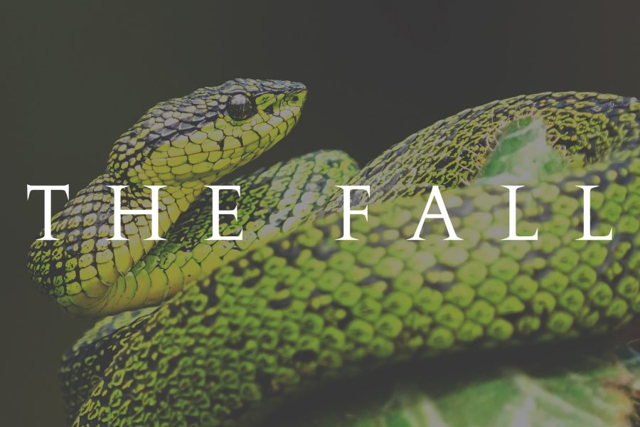 #37 The Fall
